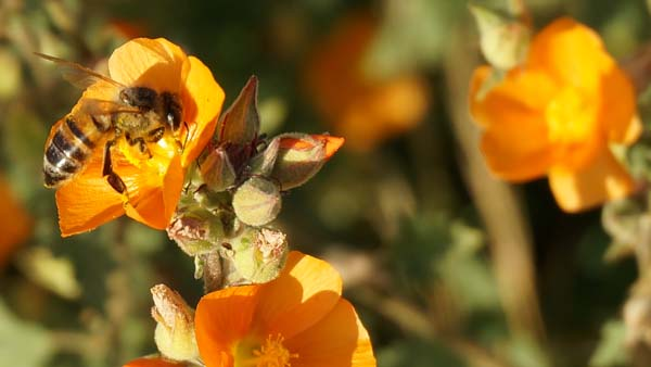 Operation Pollinator program abuzz with new tools for superintendents