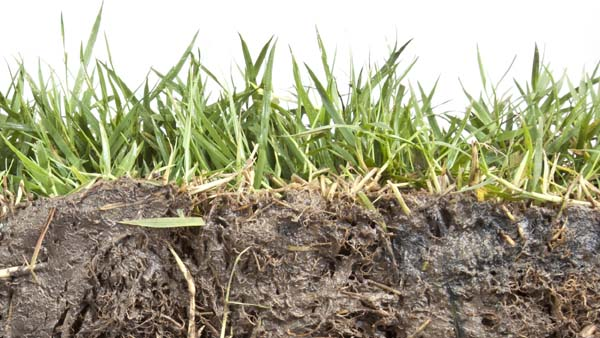 Herbicide found in tainted fungicides