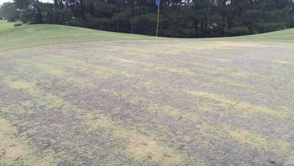 Cold temps deal blow to some Grand Strand courses