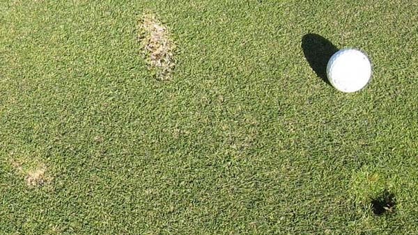 Signage could help convince golfers to fix ballmarks on greens