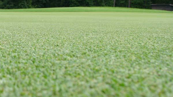 Georgia Golf Environment Foundation backs turf research efforts at UGA
