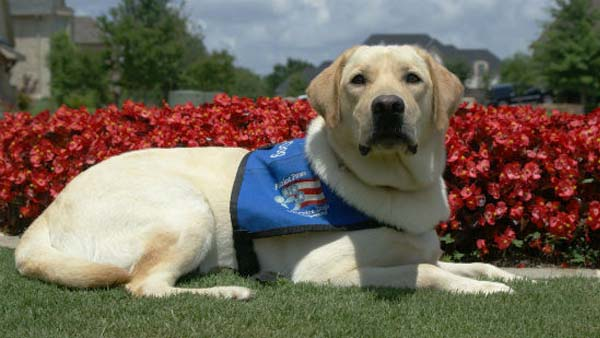 Jacobsen CPO program helps connect vets with service dogs