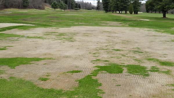 This green that has been damaged by winter conditions has been slit-seeded in multiple directions.