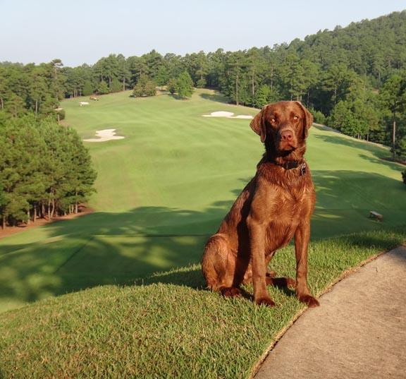 bayer helps superintendents, assistants celebrate golf course dogs