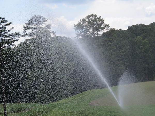 According to research, irrigation can help spread moss infestations. Photo by John Reitman