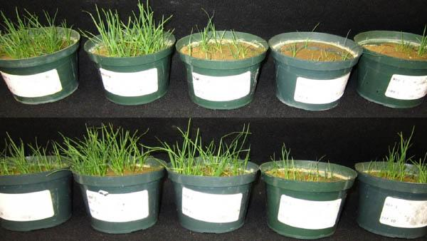 TurfNet's collection of recorded Webinars includes nearly 200 presentations from dozens of turfgrass researchers.
