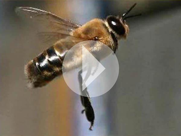 Scott Witte conducted a beekeeping Webinar in 2015. Click on the image above to view it.