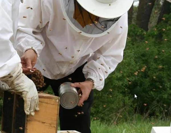 Raising bees is a labor of love for Scott Witte, CGCS.