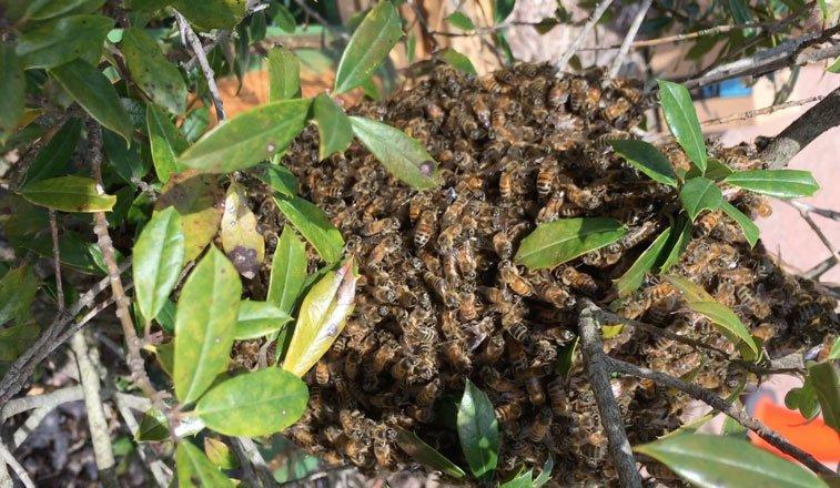 natural_swarm.jpg