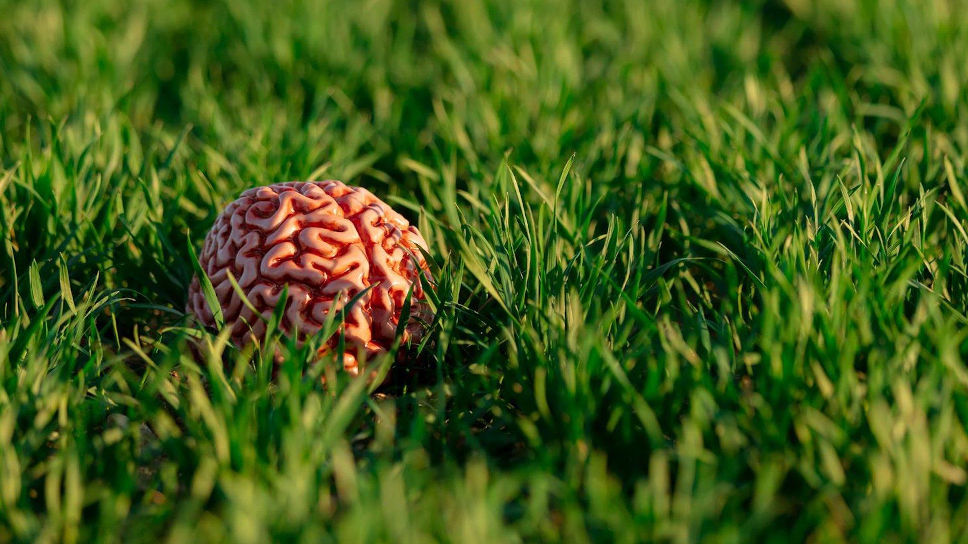 Adjust Your Brain . . . Naturally