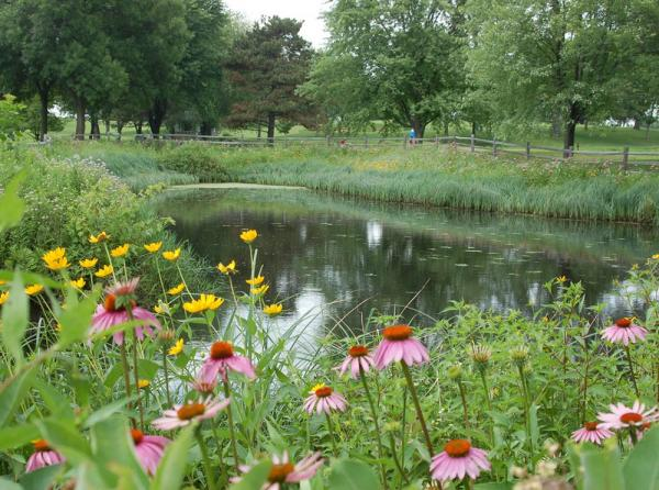 Minnesota's BMP guidelines are helping prove to state agencies that golf courses, like Keller Golf Course in Maplewood, already are responsible stewards of the state's natural resources. Photo by Ramsey County Parks and Recreation