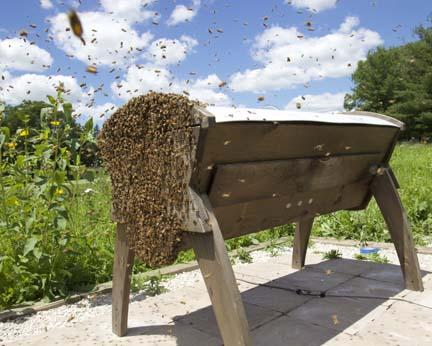 Helping the local bee population rebound has provided Bryan Bergner with a sense of accomplishment.